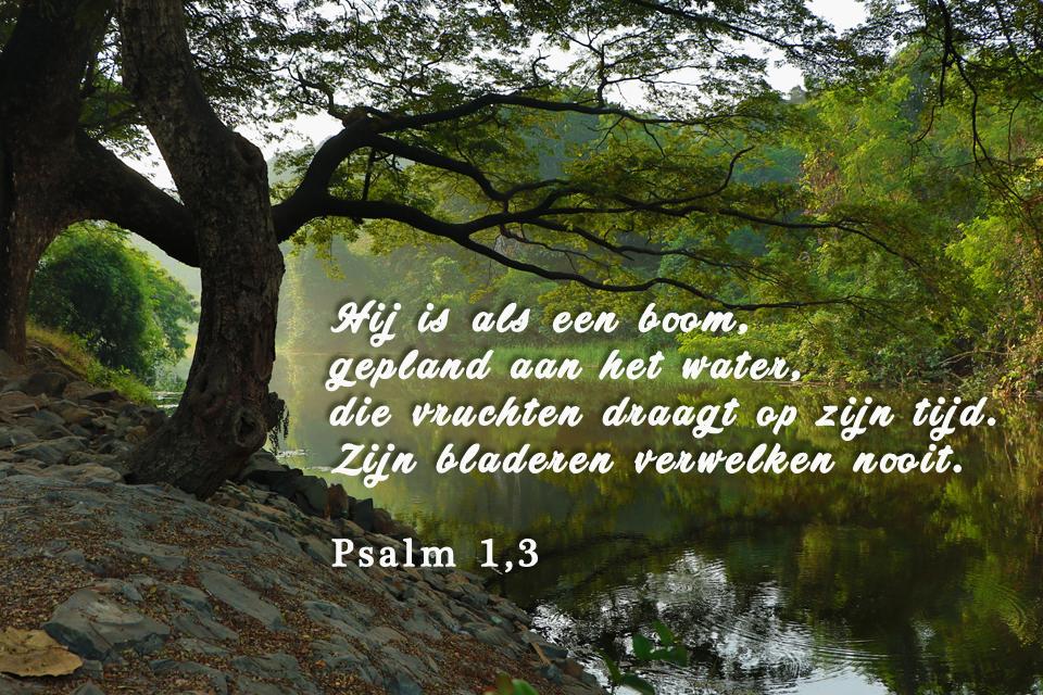 De stroom die vreugde geeft aan de Stad van God (4)