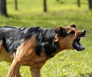 """""""Versteende"""" honden.."""